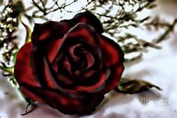 The Sick Rose/William Blake