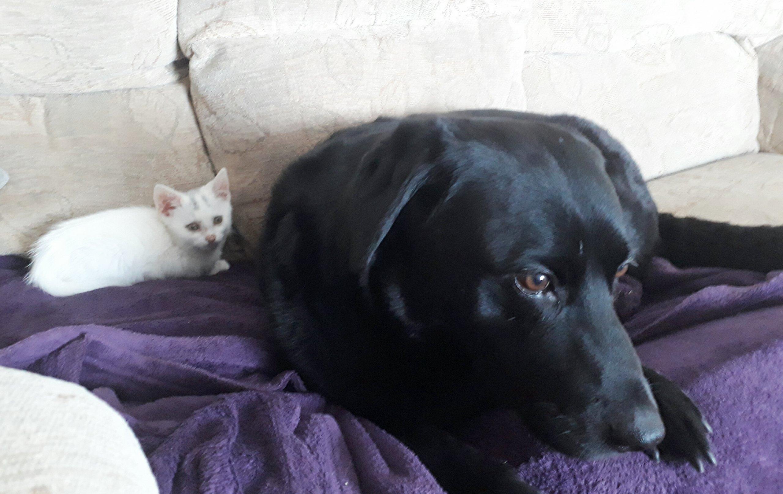 Kitten Love Part 2